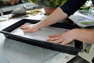 Ryan places one seed sheet on top of the peat sheets. Each seed sheet has seeds spread evenly across for best growing.