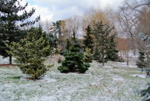 I try to add new specimens to this area every year - you can see the many sizes of trees I've planted. This area includes pines, spruces and firs, as well as other evergreens.