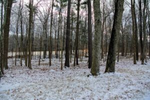 Here is a look through the woodlands toward one of my lower hayfields.