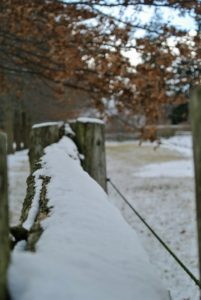 Visitors always comment on the fencing. It is 100-year old white spruce fencing with newer cedar uprights to support it. I love how the snow collects on the fence rails.