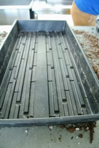 Here is a tray without cells - this is great for smaller seeds.
