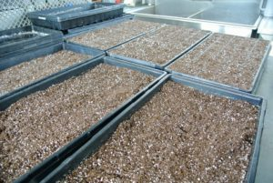 When seeding several trays, we often create an assembly line process.