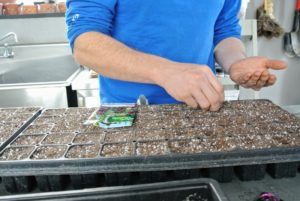 It's always a good idea to keep a record of when seeds are sown, when they germinate, and when they are transplanted. These observations will help organize a schedule for the following year.