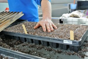 Cover the seeds by leveling the soil and filling the holes back in with the medium.