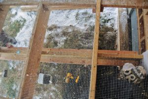 Once built, the wooden trays will catch everything that falls through the netted floor in the aviary.