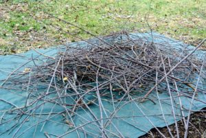 They already pruned quite a bit - these  branches will be chipped and reused in the garden later.