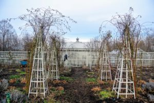 I also have six of these tower trellises in my flower garden. These rose climbers love these supports and grow beautiful blooms here every season.