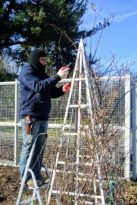 When selecting a trellis, be sure it's strong enough to hold the weight of a full grown rose plant in both wet and windy weather.