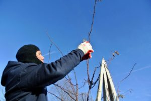 Also be sure it is easy to access all parts of the trellis for pruning.