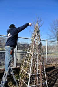 Wilmer assesses which ones need pruning.