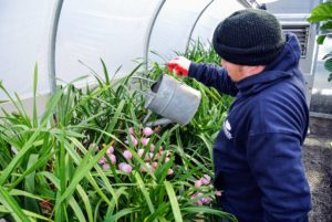 Here's Wilmer watering some of the beautiful orchids.