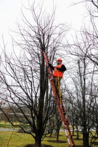 Our friends from SavATree were also at the farm, pruning trees in the pear grove behind my gym building. Compared to apple trees, pear trees naturally develop more narrow, angled, and upright branches. http://www.savatree.com