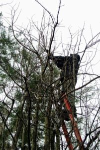 Danny Broglino is a 27-year veteran of SavATree. He has a degree in forestry, and is also a certified arborist and pruning expert. He's been caring for my trees since I took over the property.