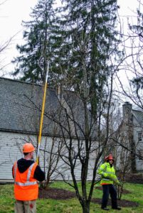 Any tree trimming work can expose eyes to dust, wood particles, and insects, so it's vital to wear proper eye protection. These experts also wear non-conductive hard hats, gloves and reflective vests.