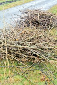 After all the branches are cut, they are gathered, neatly piled and then processed through a wood chipper to make mulch.