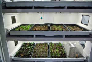 About a week later, we checked on the trays. These trays are in different stages of growth. Inside the Urban Cultivator, they are receiving the best growing conditions. It is fascinating to watch the plants grow.