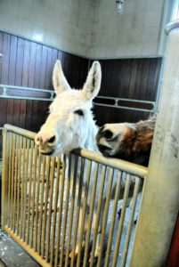 Despite the pending storm, the donkeys are still very friendly and curious - I think Clyde is also very hopeful - he looks as if he's waiting for an afternoon snack.