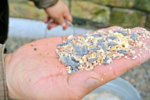 This seed mix includes white millet, black oil sunflower seeds, striped sunflower seeds and cracked corn.