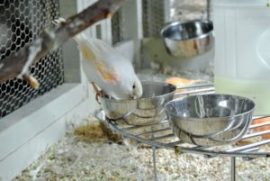 I provide multiple feed bowls with a buffet of seeds along with all their fresh vegetables and fruits.