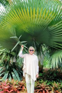 Here I am standing in front of a stunning, yet rare, Copernicia fallaensis, or Giant Yarey palm. It produces a massive, smooth, light gray trunk that can reach up to about 65-feet tall. The huge, rounded crown consists of many enormous, oval leafblades that are very evenly divided into very stiff segments.