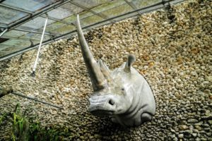 At the end of the tour, I saw this mounted on the side of the greenhouse - a rhino-head. Don't worry, it is made of plastic and weighs less than a pound. It looks so real.  It was a lovely day and a wonderful garden tour.