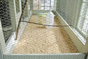 The bottom of the cage has a fresh layer of bedding, clean water and a fresh vegetable buffet. New, clean, natural wooden branches are placed into the cage to use as perches.
