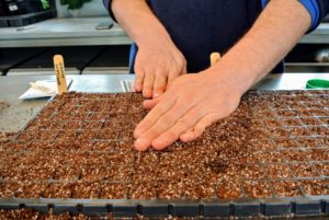 Ryan does this carefully, so as not to move any of the seeds in the tray.