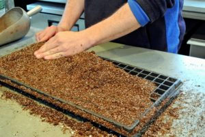 Ryan fills the seed starting tray with mix and pats it down lightly into each compartment. The mix should be level with the top of the tray.