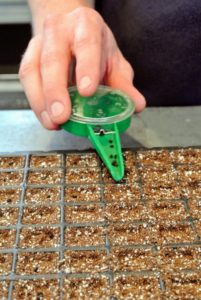 Ryan begins to drop onion seeds evenly into each compartment.