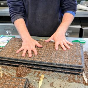 To create a quarter-inch deep furrow in the middle of each compartment, Ryan places one tray over another and presses down lightly, so the bottom of one tray makes indentations in the soil-filled compartments of the other.