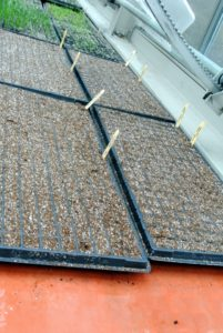 Once the seed trays are done, Ryan takes them to the greenhouse where they will get ample light and heat.