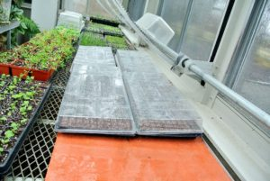 We love these heat mats. Heat mats increase germination rates and allow temperature control.