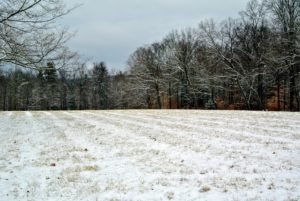 This clearing is a hayfield. I have photographed this field many times through the seasons.