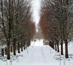 This view looks down the length of the allee of linden trees. I love this allee - I only wish it was longer.