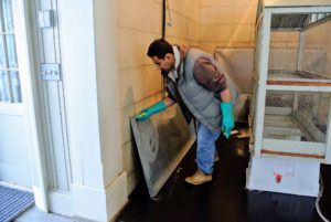 Using soap and water, or a special enzymatic bird cage cleaner, Carlos follows with a good scrubbing.