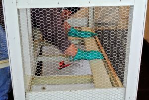 While cleaning, Carlos also looks for any hazardous conditions that could harm the birds in the cage, such as loose wooden slats or broken netting, etc. Fortunately, this cage is well-built and very durable - it is in great condition.