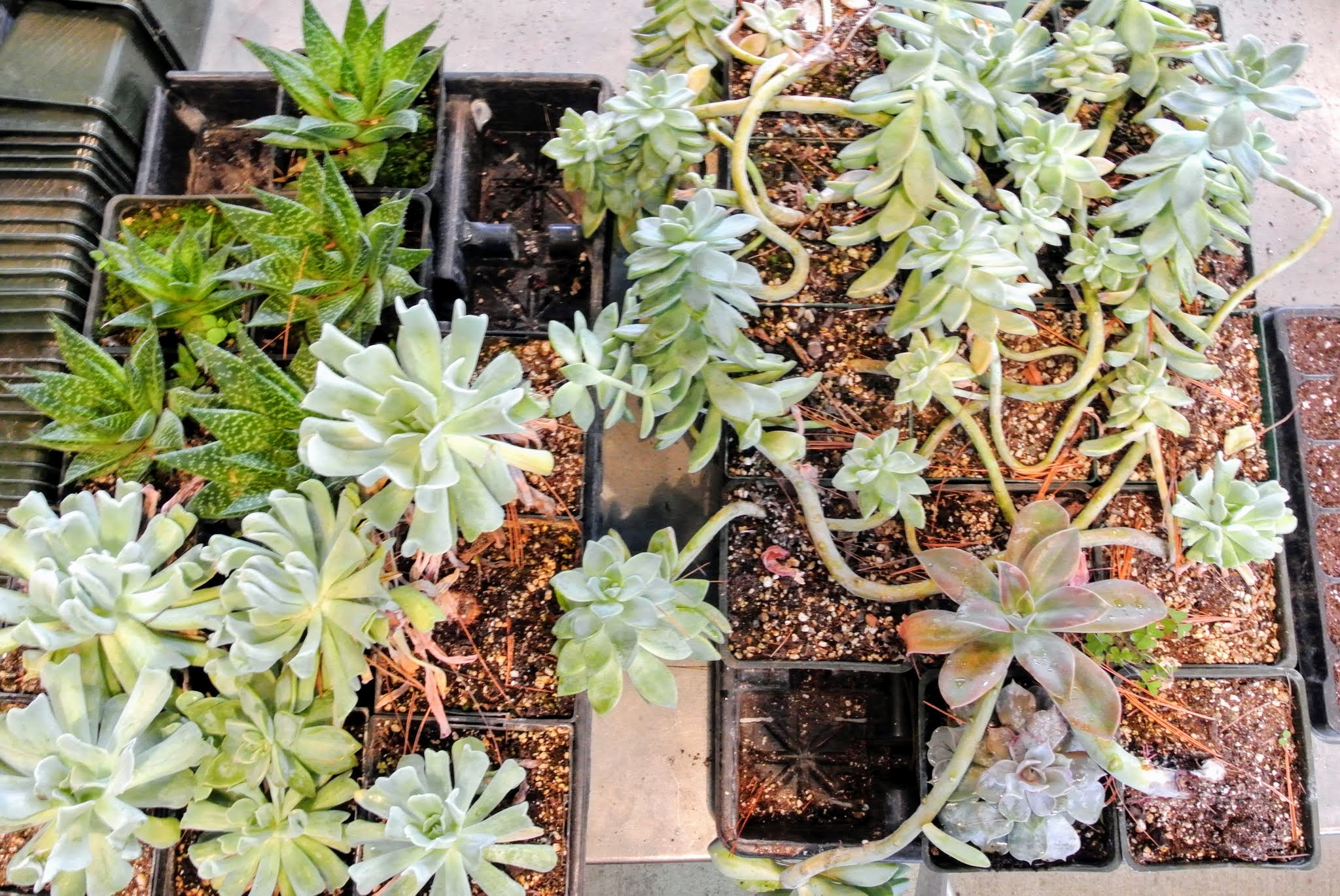 The Martha Stewart Blog Blog Archive Repotting Succulents In