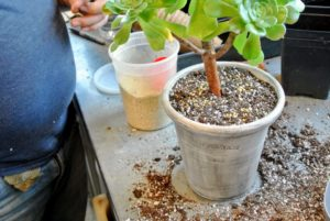 Plants are generally very easy to repot - it just takes a little time.
