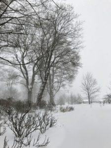 It is a veritable winter wonderland.