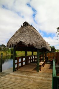 This is a thatched roof shelter at the dock before we departed on the airboat. It is modeled after the native Indian chickee huts.