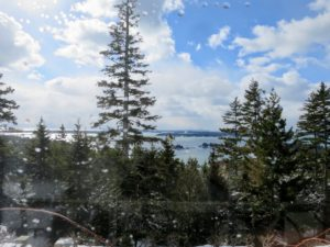 This is one of my favorite spruce trees - I love how it frames this view of Seal Harbor.
