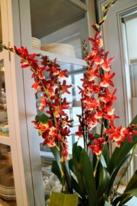 It's another stunning orchid with its stems of red colored flowers. When watering, it should be thorough and the medium should be dry at least half way through before watering again.