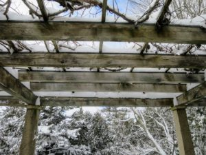 Snow even builds on top of the pergola above my West Terrace - these kiwi vines, which are original to the house, have been through many snowfalls.