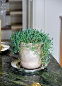 On the table in my foyer are several potted sedums. Sedum, a large genus of flowering plants, are also known as stonecrops and are members of the succulent family.