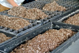 Seed trays come in all different sizes. The containers should be at least two-inches deep and have adequate drainage holes. When possible, prepare several trays in an assembly-line fashion to save time.