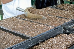 When seeding, use a formula mix that is specially made for starting seeds. A good seed starting medium will have perlite, vermiculite, and a large percentage of peat moss.