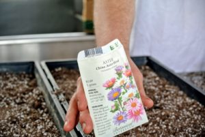 This China Aster Blend contains an old-fashioned selection of single-flowered China asters in red, pink, purple, and white. They grow best near the back of the flowerbed for a mid-summer showing. They make fabulous, long-lasting cut flowers.