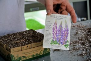 Ryan is planting Texas Bluebonnet, also called Old Maid's Bonnet and Wild Lupine. These are native to the eastern half of the U.S. and can be grown in any well-drained, sandy or gravelly soil.