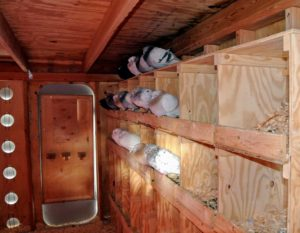 On one side of the loft is an entire wall of nesting spaces. Pigeons mate for life, and both female and male pigeons share responsibility of caring for and raising their young.