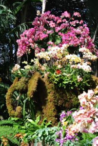 Orchids adorn elephant topiaries that welcome you into the space. The Thai elephant is an official national symbol of Thailand.